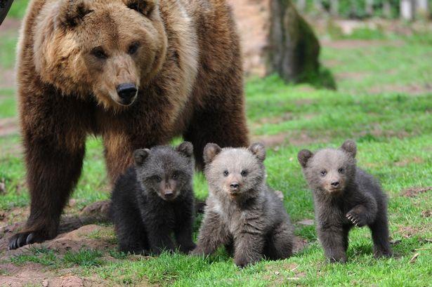 Medvedica a tri medvieďatá